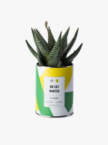 Plante Grasse FC Nantes x AY Cactus