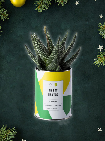 Plante FC Nantes x Ay Cactus